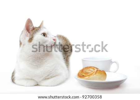 Amazing cat lying near to white saucer and cup - stock photo