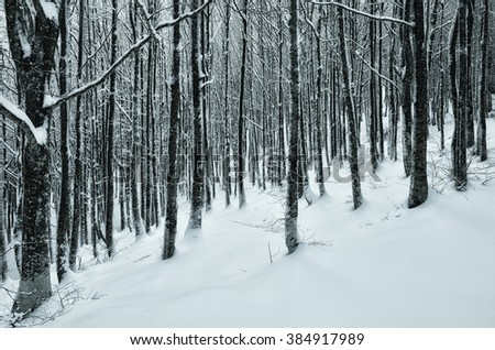 Amazing colors of the snowy forest in winter - stock photo