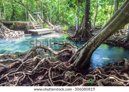 Amazing crystal clear emerald canal with mangrove forest
