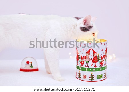 Amazing curious cat looking into Christmas jar with light inside
