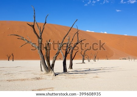 amazing dedvlei in the namib naukluft national park namibia - stock photo