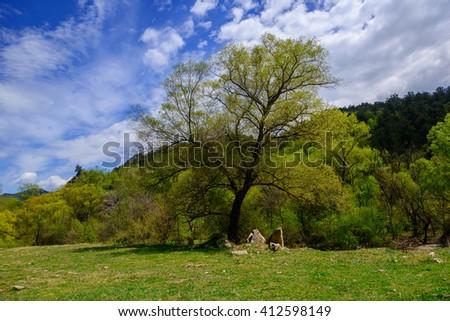 Amazing early spring landscape, Armenia - stock photo