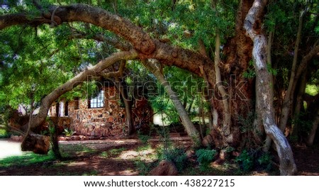 Amazing enchanted forest in a dreamlike fairy tale. Stunning photo of mysterious wonderland. Creative artwork. Beautiful old trees with lush foliage on a lodge background. Magical landscape. Vintage   - stock photo