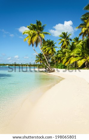 Amazing exotic island with beautiful tall palm trees, white sandy beaches and azure water, wallpaper, background - stock photo