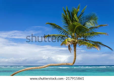 Amazing, exotic palm tree on a background of azure Caribbean Sea and blue sky - stock photo