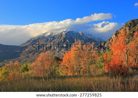 Amazing fall color in the Utah mountains, USA. - stock photo