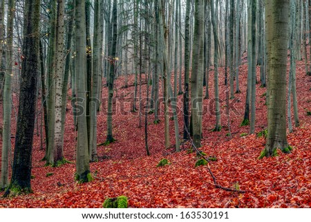 Amazing Fall Forrest. Lovely Nature Picture of an European Forest in Autumn Bavaria, Germany. Spooky and Creepy Atmosphere. - stock photo