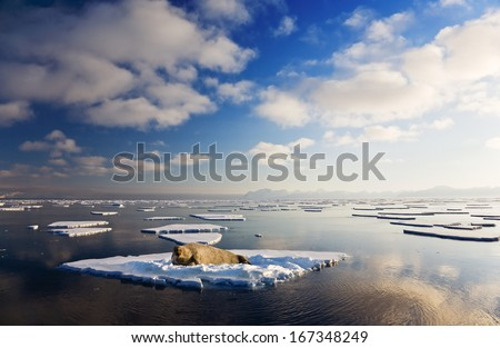 Amazing frost Sea landscape and Seal with sunset of Spitsbergen in the Arctic North Pole region.  - stock photo