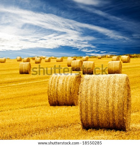 Amazing Golden Hay Bales on a perfect sunny day - stock photo