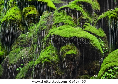 Amazing green Moss forest - stock photo
