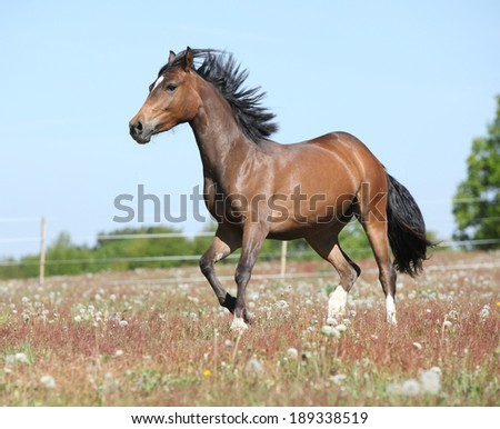 Amazing horse with flying mane running on spring pasturage