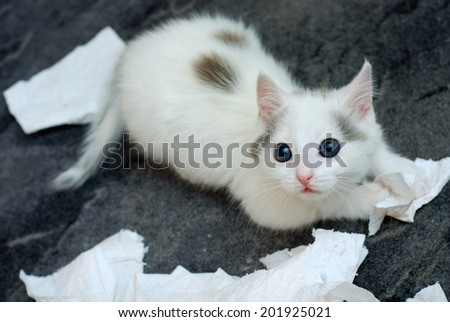 Amazing kitten playing with toilet paper - stock photo