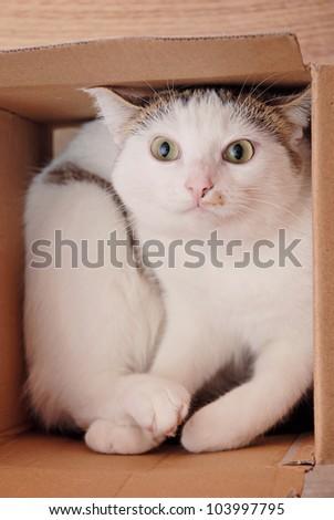 Amazing lady-cat lying in the carton box - stock photo