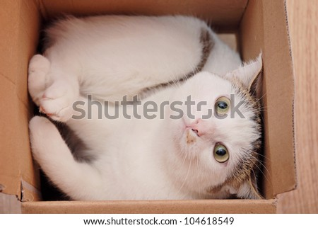 Amazing lady-cat lying in the carton box - stock photo
