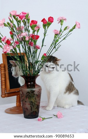 Amazing lady-cat sitting on the table near to vase with flowers and the old mirror - stock photo