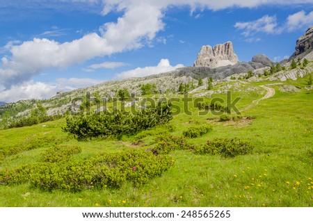 Amazing landscape with mountain flowers and mountain pine, Averau-Nuvolau group, Dolomites Mountains, Italy - stock photo