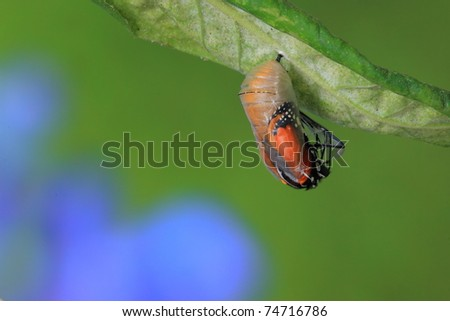 amazing moment about butterfly - stock photo