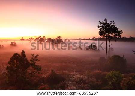 Amazing morning fog with silhouette trees in Thailandz