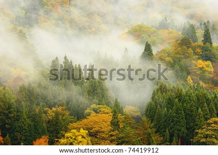 amazing morning mist in the forest , tree, mountain, hill - stock photo