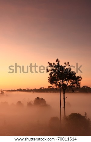 Amazing morning misty fog with silhouette trees in Thailand - stock photo