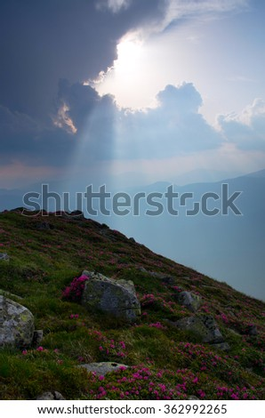 Amazing mountain landscape with flower of rhododendron. Carpathian Mountains - stock photo