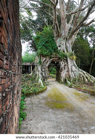 Amazing old tree with big root at ancient temple, Quang Ngai, Vietnam, impression root make gate for entrance