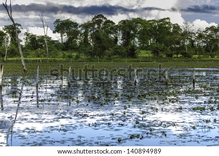 Amazing Pantanal River - Pantanal is one of the world's largest tropical wetland areas located in Brazil , South America - stock photo