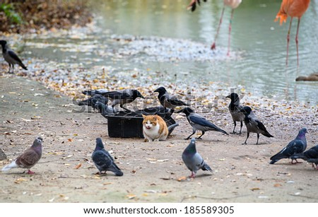 Amazing picture - cat steals food birds - stock photo