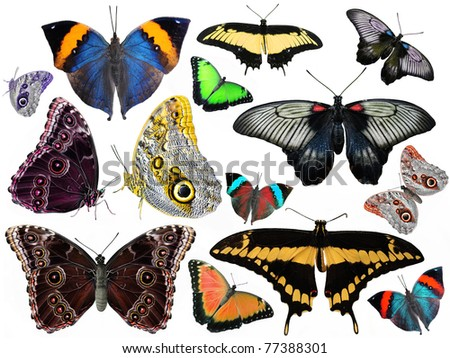 amazing set of butterflies isolated on white - stock photo