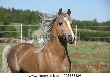 Amazing stallion running alone on summer pasturage - stock photo