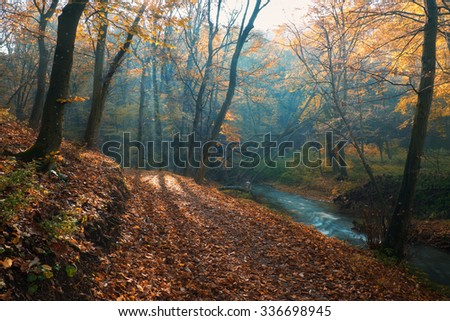 Amazing sun rays of dreamy autumn forest