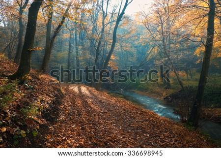 Amazing sun rays of dreamy autumn forest - stock photo