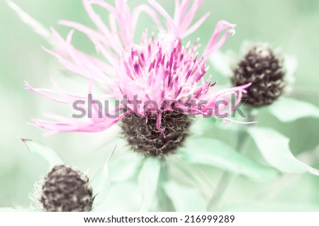 Amazing sunrise at summer meadow with pink milk thistle wildflower. Abstract floral background in vintage style, watercolor painting effect and blur - stock photo