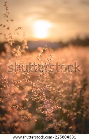 Amazing sunrise at summer meadow with wildflowers. Abstract floral background in vintage style, unfocused - stock photo