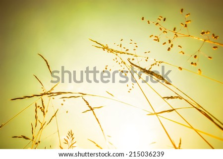 Amazing sunrise at summer meadow with wildflowers under golden sky. Nature floral background - stock photo