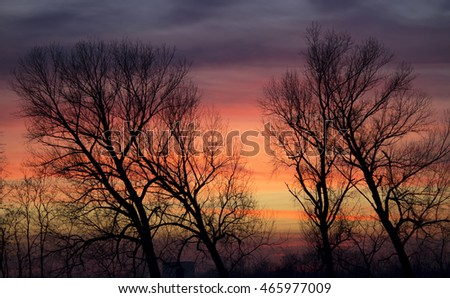 Amazing sunset during winter with trees silhouette in the foreground
