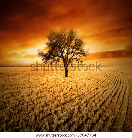 Amazing sunset over a tree in a field - stock photo