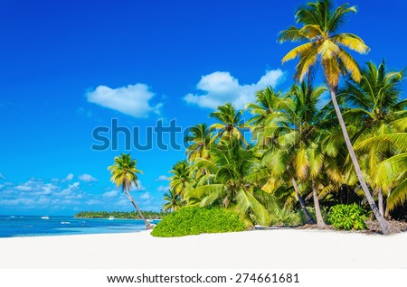 Amazing tropical beach with palm tree entering the ocean against azur ocean, gold sand and blue sky - stock photo