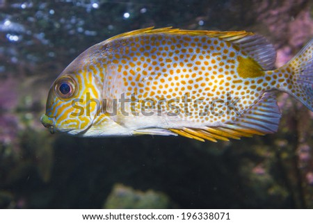 amazing tropical fish with many colors in the sea - stock photo