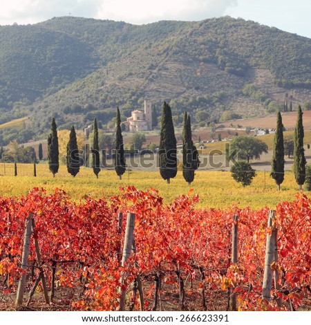 amazing  tuscan vineyards in autumnal colors , at horizon St. Antimo Abbey ,Castelnuovo dell' Abate,n region of famous red italian wine Brunello di Montalcino, Italy, Europe - stock photo