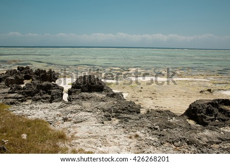 Amazing view of coral reef on an island in Zanzibar