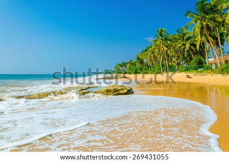Amazing view of exotic sandy beach with high palm trees  - stock photo