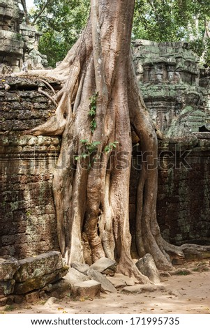 Amazing view of Ta Phrom temple ruins in Angkor, Siem Reap, Cambodia