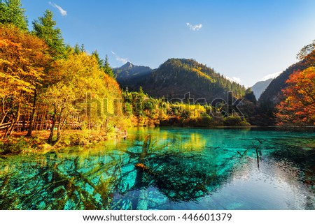 Amazing view of the Five Flower Lake (Multicolored Lake) among fall woods in Jiuzhaigou nature reserve (Jiuzhai Valley National Park), China. Submerged tree trunks are visible in azure water.