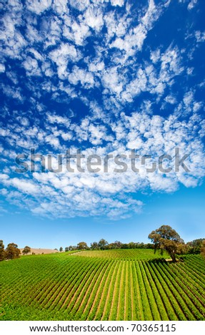 Amazing vineyard in South Australia - stock photo