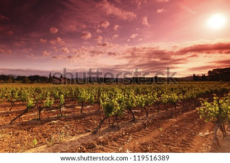 Amazing Vineyard Sunset in france - stock photo