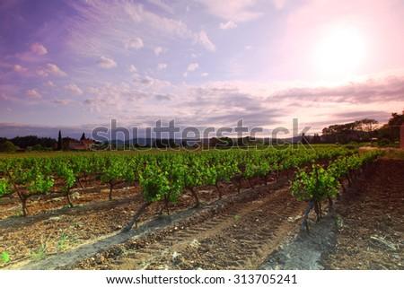 Amazing Vineyard Sunset in france - stock photo