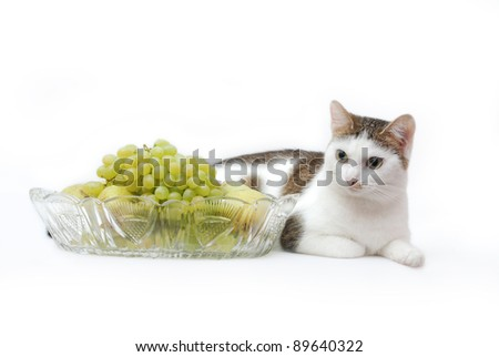 Amazing white cat lying near to crystal vase with grapes and pears on the white background - stock photo