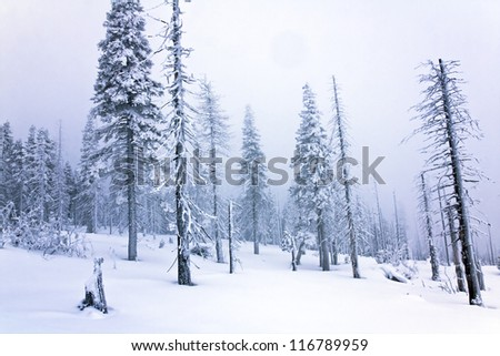 amazing winter landscape in forest