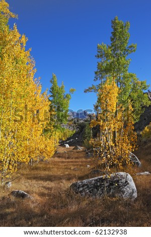 Amazingly beautiful autumn landscape - trees with colorful foliage and large rocks - boulders in the bright yellow grass